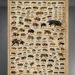 Types Of Bees poster