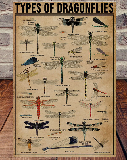 Types Of Dragonflies poster