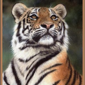 A girl who really love tiger poster