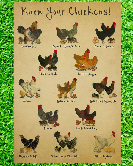 Know your chickens poster