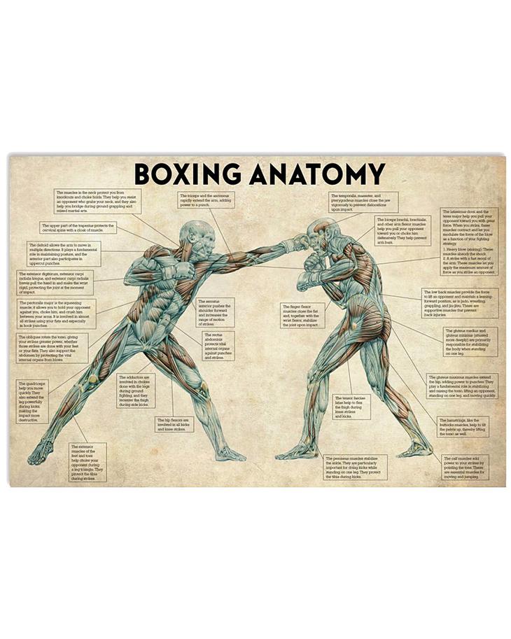 Boxing Anatomy Poster
