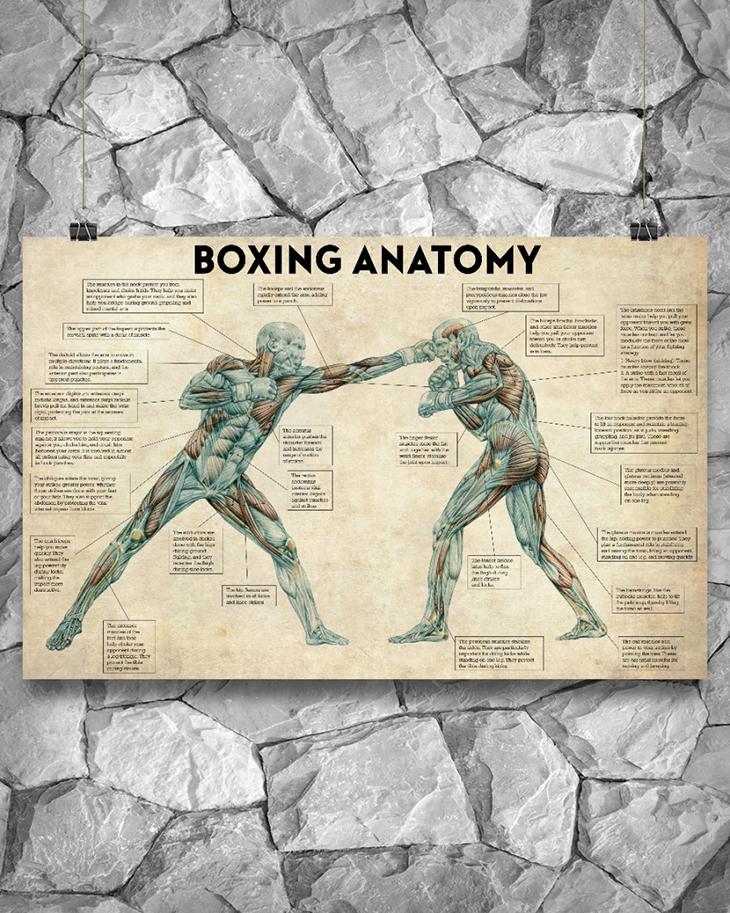 Boxing Anatomy Poster2