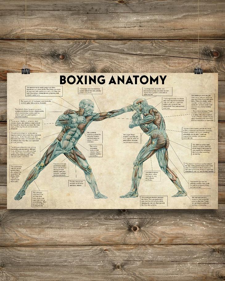 Boxing Anatomy Poster3